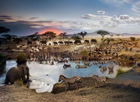 Africa Occidentale Serengeti incanto simbiosi uomo natura