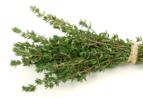 Timo erba aromatica proprietà benefici controndicazioni