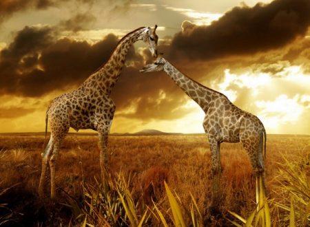 Giraffe Lista Rossa Iucn rischiano estinzione popolazione meno 40%