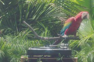 Calvin Harris – Feels  ft. Pharrell Williams, Katy Perry, Big Sean