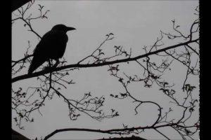 Audiolibro Il Corvo di Edgar Allan Poe
