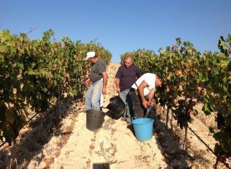 Cannonau vino della Sardegna caratteristiche e proprietà organolettiche