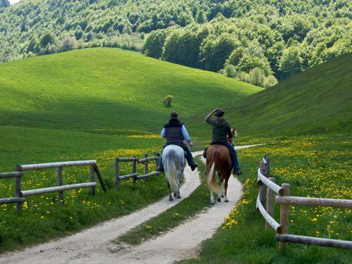 Trekking a Cavallo tra le montagne del Trentino Orientale
