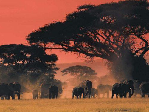 Kenya Mondo magico africano tra savana e Oceano Indiano