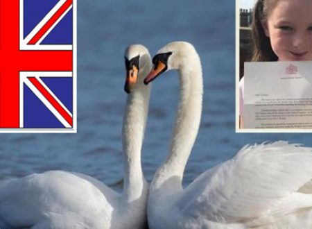 UK Bimba chiede un cigno. La Regina glielo regala