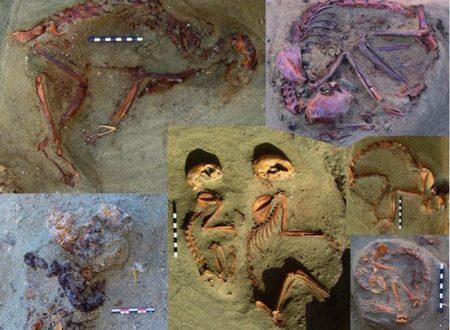 In Egitto scoperto un antico cimitero di gatti