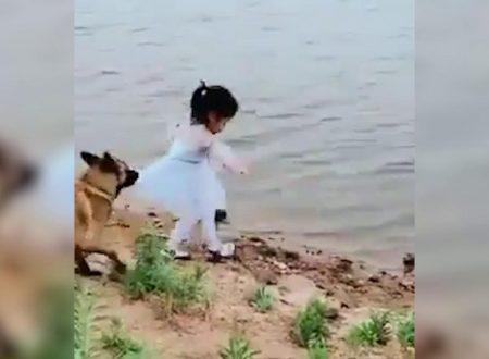 Un cane protegge la sua padroncina raccogliendo la pallina