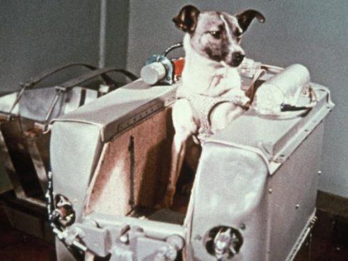 Laika 3 novembre 1957 cagnolina astronauta lanciata nello spazio