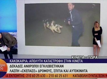 Grecia Maiale in diretta Tv aggredisce inviato