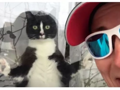 """Postina canadese: """"C'è un gatto che mi vuole uccidere"""""""