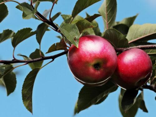 Un sorso di sidro di mele